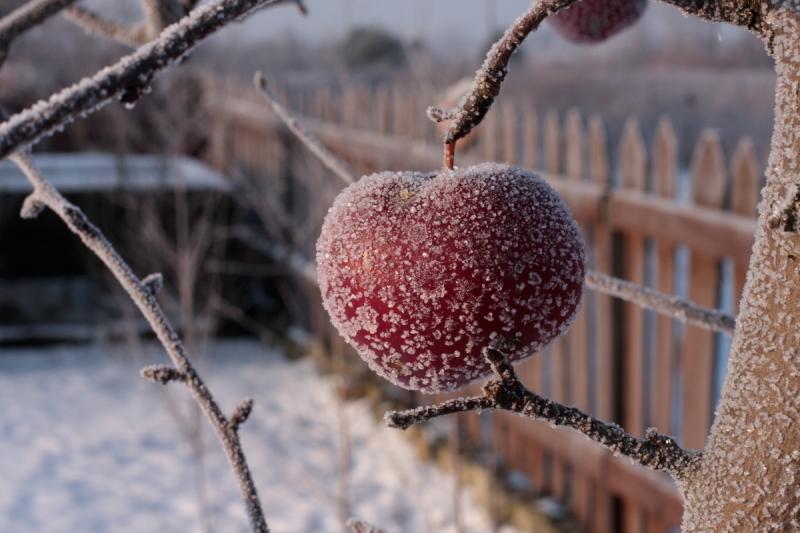 jablkoszron